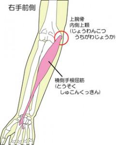 野球肘の筋肉