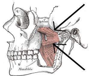 口を開く時の筋肉