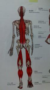 サイドスローと背中の痛み